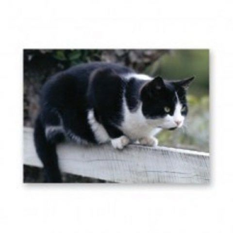 Black and white Cat on fence card